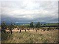 NY6117 : Beech Tree Farm apple orchard, Reagill by Karl and Ali