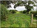 NU1830 : A green lane near Elford by Richard Webb