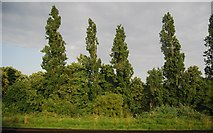 TQ2673 : Trees by the line near Wandsworth Cemetery by N Chadwick