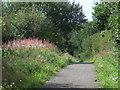 NZ3346 : Railway path near High Moorsley by Malc McDonald