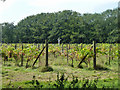 TQ0522 : Scarecrow in the vineyard by Robin Webster