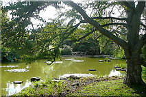 SU9185 : Cliveden, water garden by Graham Horn