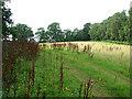 TF6824 : Track through Short Tree Plantation by Evelyn Simak