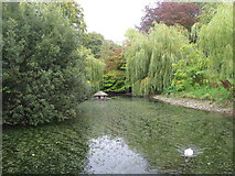 ST6601 : Duck pond, Cerne Abbas by Alex McGregor