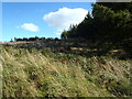 NX6564 : Ruined dyke in Laurieston Forest by Bob Peace