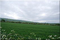 TQ1913 : Wheat field by the Downs Link by N Chadwick