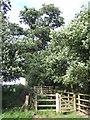 TL4701 : Gate near Epping by Malc McDonald