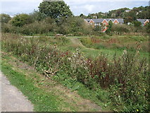 TQ4210 : Lewes Railway Land LNR by Paul Gillett