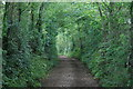 SX8877 : Hamblecombe Lane by Hugh Craddock