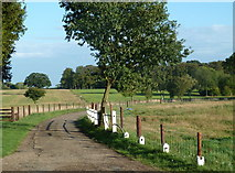 TF9705 : Letton Hall driveway by Andrew Hill