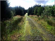 NS6583 : Waterhead, forestry track [2] by Robert Murray