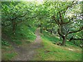 NZ0863 : Eltringham Wood by Andrew Curtis
