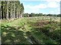 SU8727 : New plantation in Willard Copse by Dave Spicer
