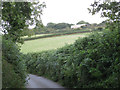 SX8280 : Hillside south of Bell Lane  by Robin Stott