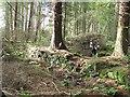NS9973 : Old dyke, Beecraigs by Richard Webb