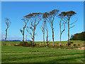 NG5436 : Tall trees at Clachan by John Allan
