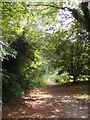 TM2649 : Fen Meadow footpath to Meadow Walk & Cumberland Street by Adrian Cable