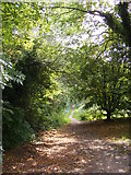 TM2649 : Fen Meadow footpath to Meadow Walk & Cumberland Street by Geographer