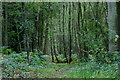 TQ3643 : Bridleway Through the Woods, Newchapel, Surrey by Peter Trimming