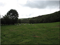 SN8880 : Fields near the River Wye, west of Llangurig by David Purchase