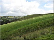 SN8979 : The slopes of Esgair Llwyn-gwyn by David Purchase