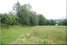 TQ6761 : Hedge along a wheat field by N Chadwick