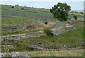 SK1966 : Lane, fields, and dry stone walls by Andrew Hill