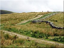 SD7983 : Pennine Bridleway ascends Wold Fell north of Newby Head Gate by Andrew Curtis