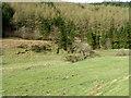 NT7462 : Molehills near Mill Brae by Maigheach-gheal