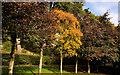J3875 : Trees, Belmont Park, Belfast (7) by Albert Bridge