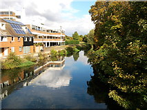 TL9925 : River Colne by Tim Marchant