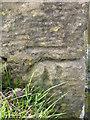 NT7260 : Bench Mark, Ellemford Bridge by Maigheach-gheal