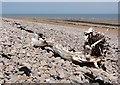 SS9946 : Driftwood on the Beach by Tony Atkin