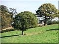 SE2606 : Farmland trees near Upper House by Christine Johnstone