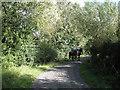 ST5685 : Riding on Gumhurn Lane  by Robin Stott