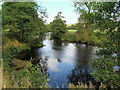 SK2566 : River Derwent by Bank Wood by Chris Heaton