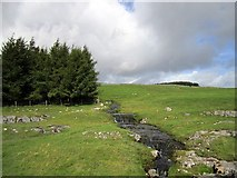 SD8970 : Branch of Thoragill Beck above the road by Andrew Curtis