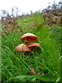 NY1417 : Toadstools above Black Beck by Michael Graham