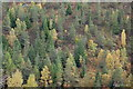 NH9413 : Autumn trees in Glenmore Forest Park by Jim Barton