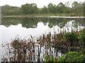 NO5350 : Balgavies Loch by M J Richardson