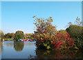 TQ0588 : Seasonal Colours at Widewater Marina by Des Blenkinsopp