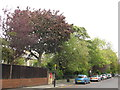 NZ2467 : The Grove / Roseworth Crescent, NE3 by Mike Quinn