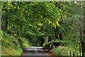 J3268 : The Edenderry Road near Edenderry, Belfast (3) by Albert Bridge