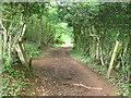 ST1986 : Path junction on the Rhymney Valley Ridgeway Walk by John Light