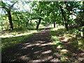 TQ3473 : Cox's Walk by Marathon