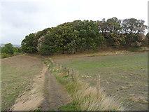 SE1614 : Benholmley Hill Wood, Almondbury by Samantha Waddington