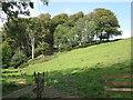 SX8351 : Hillside woodland seen from Bugford Lane  by Robin Stott