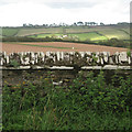 SX8449 : Wall with triangular coping near Ash House gates  by Robin Stott