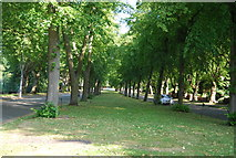 SP0683 : Central Reservation, Pebble Mill Rd by N Chadwick