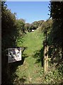 SX3554 : Footpath near Portwrinkle by Derek Harper